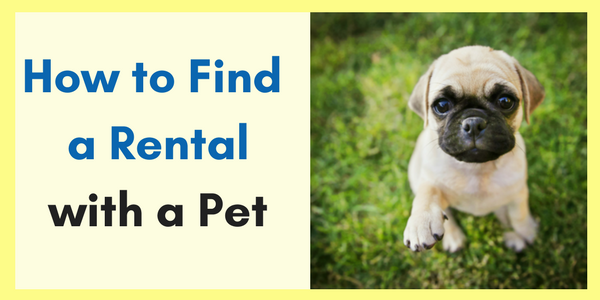 How_to_Find_a_Rental_with_a_Pet_CTA_image