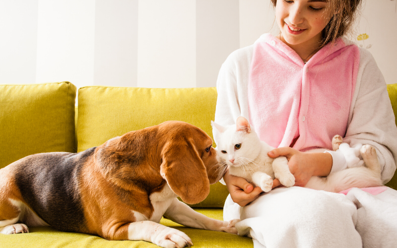 how_to_search_for_a_pet-friendly_rental